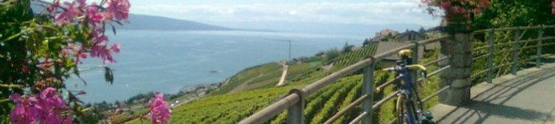 Vignobles haut de Vevey