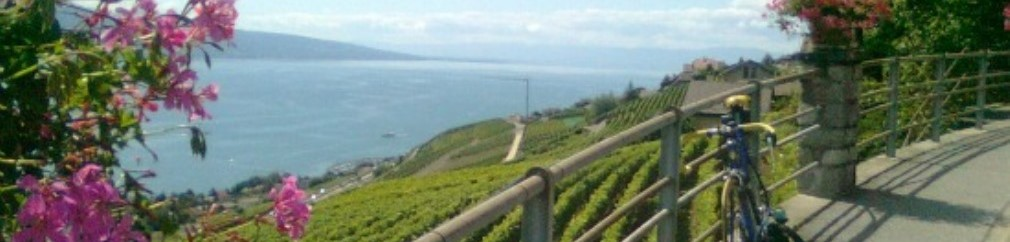 Vevey - viñedo